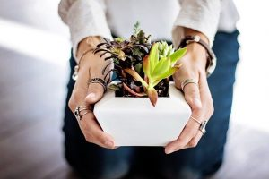 succulents-2347550_640